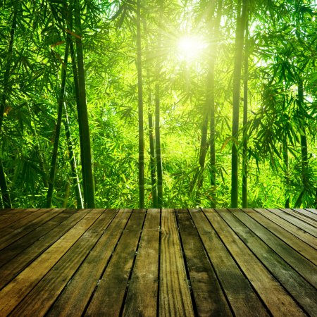 Photo for Wooden platform and Asian Bamboo forest with morning sunlight. - Royalty Free Image