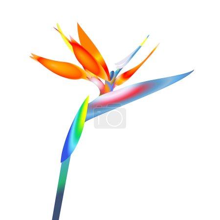 oiseau de paradis fleur
