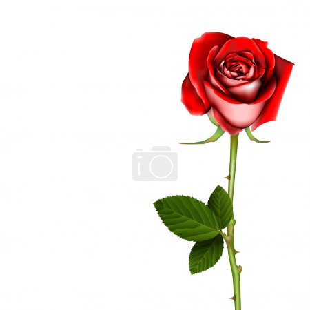Illustration for Red Rose, vector - Royalty Free Image