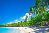 """Постер, картина, фотообои """"красивый пляж в Сент-Люсии, Карибские острова"""""""