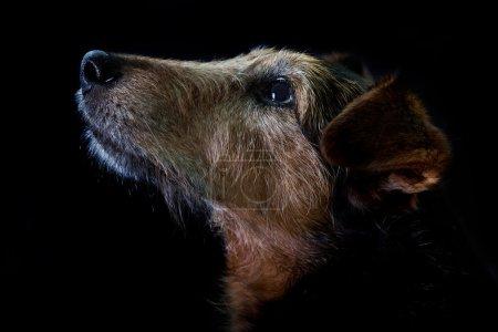 Photo pour Portrait du vieux chien - image libre de droit