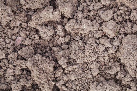 Photo for Background texture of cultivated garden soil with a high content of clay - Royalty Free Image
