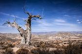 Vyprahlé strom v pouštní krajině