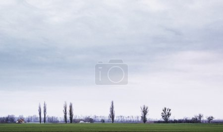 Photo for Field landscape - Royalty Free Image