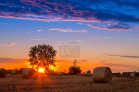 Sunset field, tree and hay bale