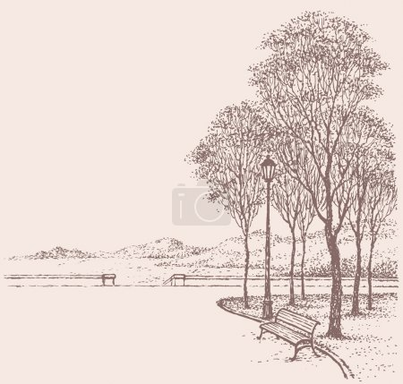 Vector park landscape. Bench near the lantern under trees