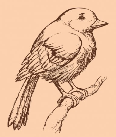 "Vector drawing of a series of sketches ""Birds"". European Robin"