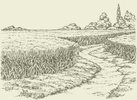 Illustration for Vector summer landscape. A dirt path through fields of wheat - Royalty Free Image