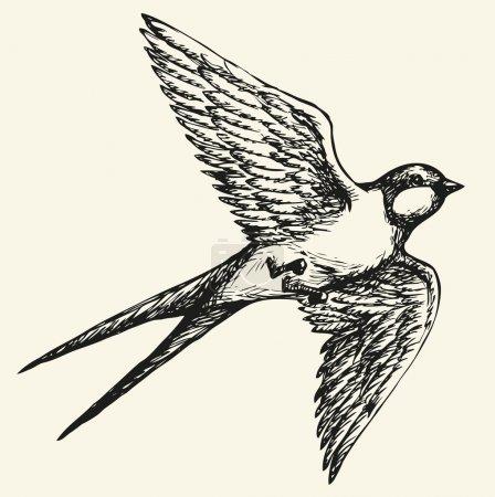 """Illustration pour Dessin vectoriel d'une série de croquis monochromes """"Oiseaux"""". Les Hirondelles et les Martin sont un groupe d'oiseaux passereaux de la famille des Hirundinidae qui se caractérisent par leur adaptation à l'alimentation aérienne. - image libre de droit"""