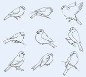 Vector outline image Set of tits and bullfinches