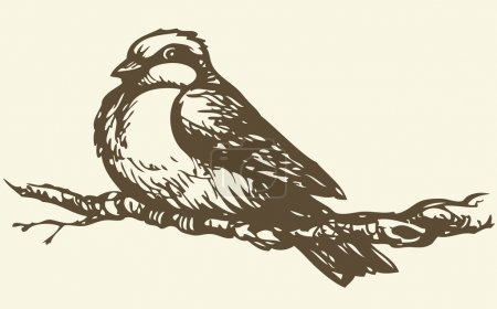 """Illustration for Vector drawing of a series of monochrome sketches """"Birds"""". The tits, chickadees, and titmice constitute Paridae, a large family of small passerine birds which occur in the northern hemisphere - Royalty Free Image"""