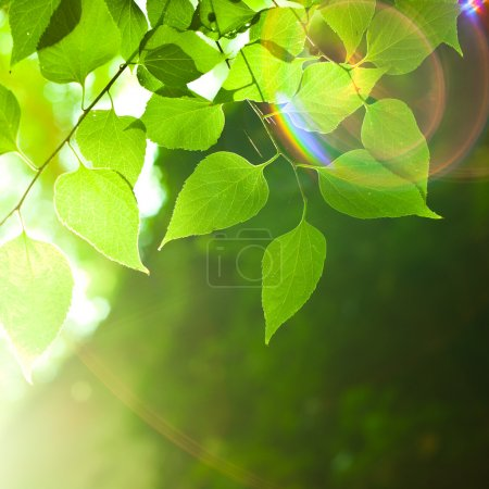 Photo for Leaves - Royalty Free Image