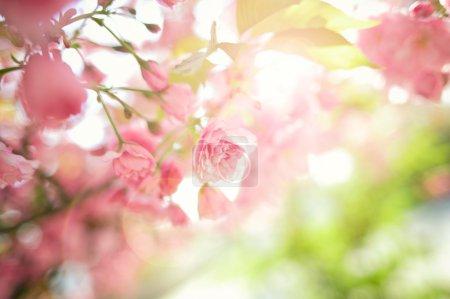 Photo pour Rose ! - image libre de droit