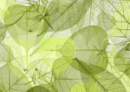 Photo pour Feuille de fond couleur verte - image libre de droit