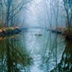 Misty Swamp...