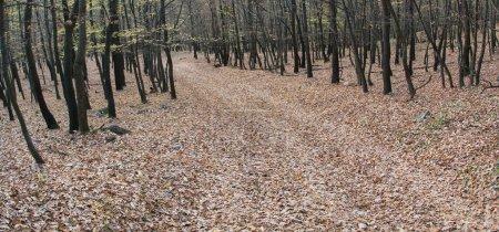 Photo for Autumn landscape - Royalty Free Image