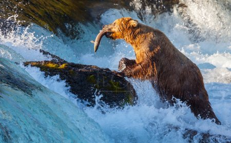 Brown bear on Alaska...