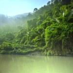 Jungle in Vietnam...
