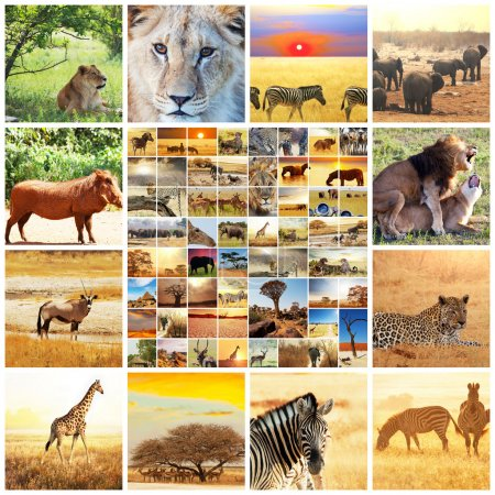 Photo pour Collages de safari africain - image libre de droit