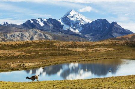 Photo pour Haute montagne en la Bolivie - image libre de droit