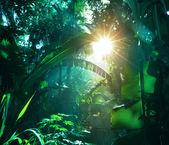 "Постер, картина, фотообои ""джунгли"""