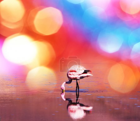 Photo for Flamingo in Bolivia - Royalty Free Image