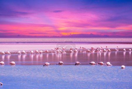 Photo pour Flamant rose en lac en Bolivie - image libre de droit