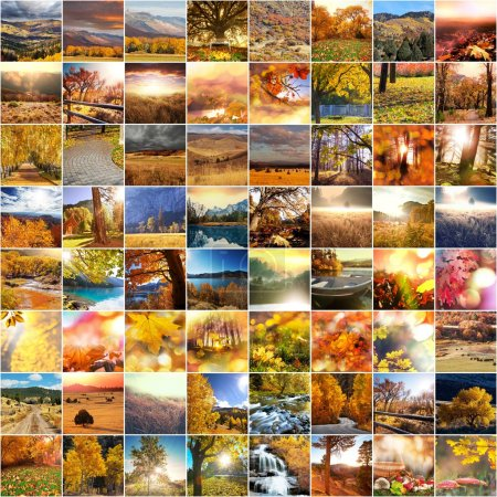 Photo for Autumn orange collage - Royalty Free Image