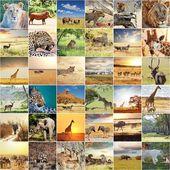 """Постер, картина, фотообои """"африканское сафари"""""""