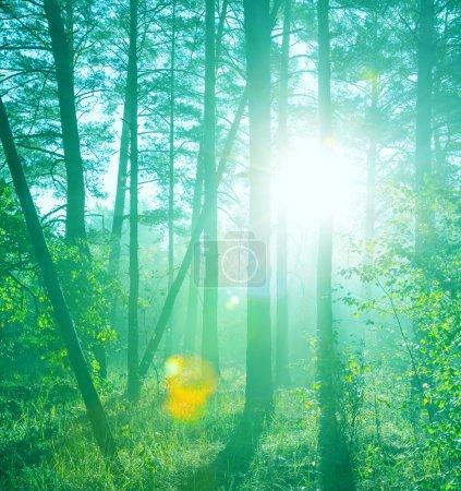 Photo pour Rayons ensoleillés dans la forêt - image libre de droit