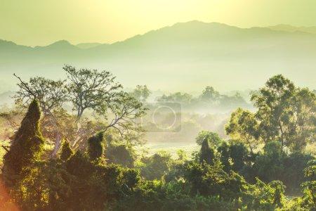Photo pour Jungle au Vietnam - image libre de droit
