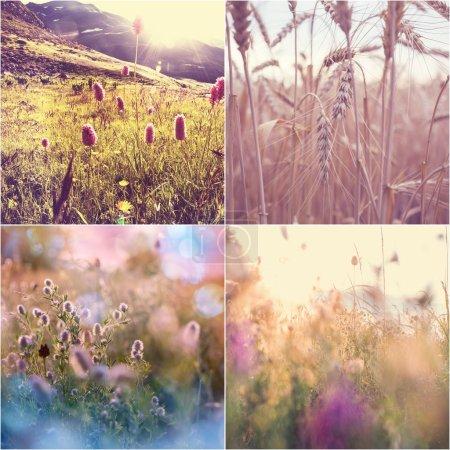 Foto de Collage de flores de primavera - Imagen libre de derechos