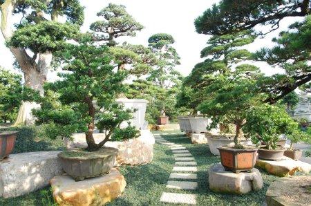 Photo pour Beaux jardins Bonsaï - image libre de droit