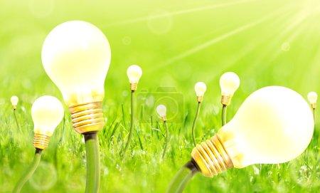 Foto de Macro vista de bulbos que crecen en la hierba verde del verano - Imagen libre de derechos