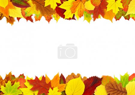 Photo for Colorful autumn leaves border isolated on white - Royalty Free Image