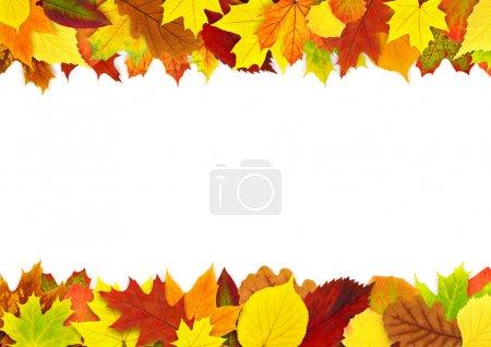 Colorful autumn leaves border