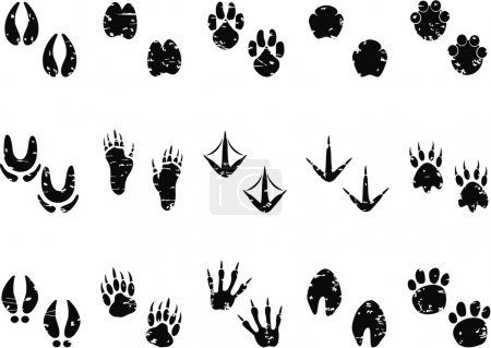 Footprint Track icon