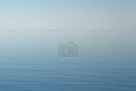 Photo for Horizon of quiet lake with little ducks by foggy day - Royalty Free Image