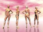 Svaly žena - 3d vykreslení
