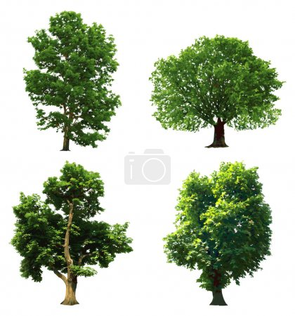 Illustration for Collection green trees. Vector illustration - Royalty Free Image
