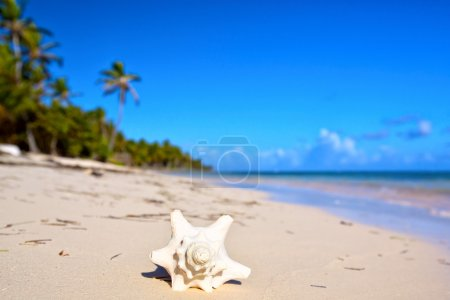 Photo for Seashell on the tropical white sand beach - Royalty Free Image