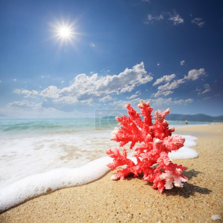 Red coral with wave on beach