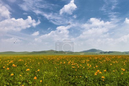 yellow flowers field with white cloud