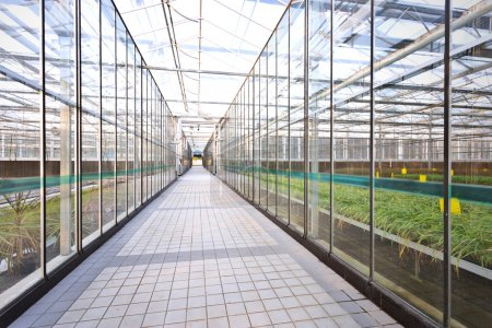 Interior of a greenhouse