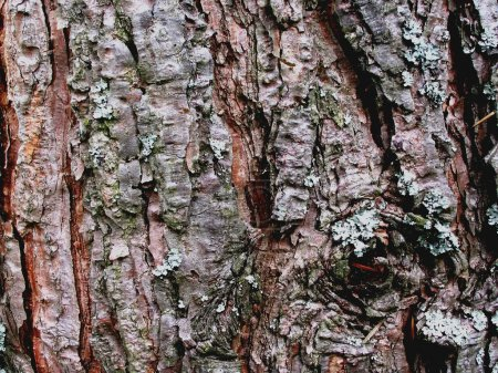 Photo for Close-up of bark - Royalty Free Image