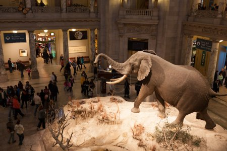 Natural History Museum, Washington, DC