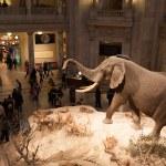 Natural History Museum, Washington, DC...