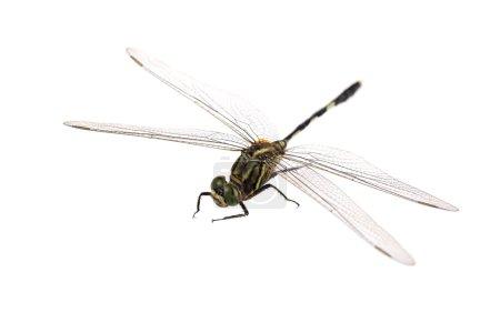 Photo pour Gros plan de la libellule avec fond blanc - image libre de droit