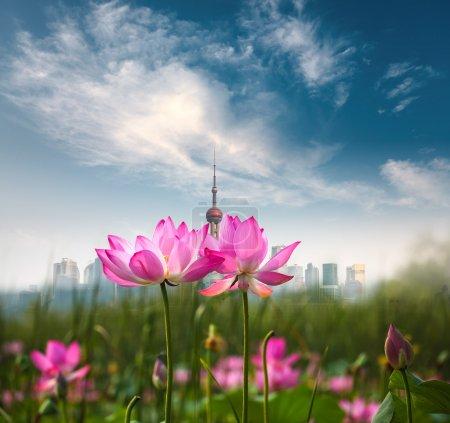 Photo pour Shanghai skyline et lotus en pleine floraison contre un ciel bleu - image libre de droit