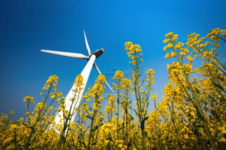 A big wind turbine in rapeseed field with a clear ...